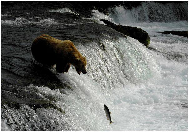 Hравы медвежьего царства