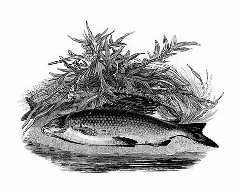 «Искусный Рыболов, или Медитация для мужчин»