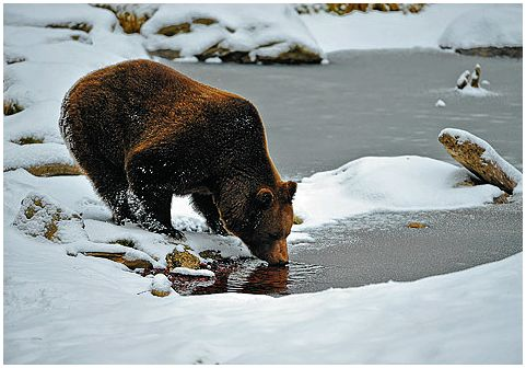 Медвежий угол