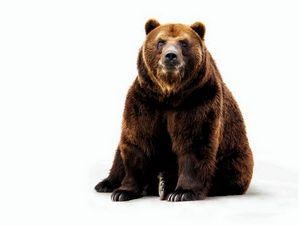 На берлоге или первый медведь (часть 2)
