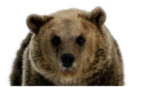 На берлоге или первый медведь