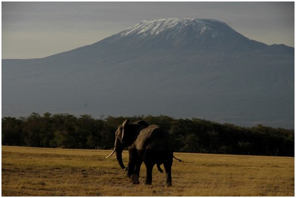 Не охота в Кении