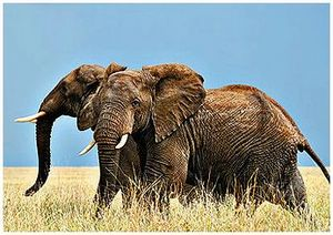 От охотника до хранителя природы