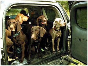 Правила перевозки охотничьих  собак и птиц на железнодорожном транспорте