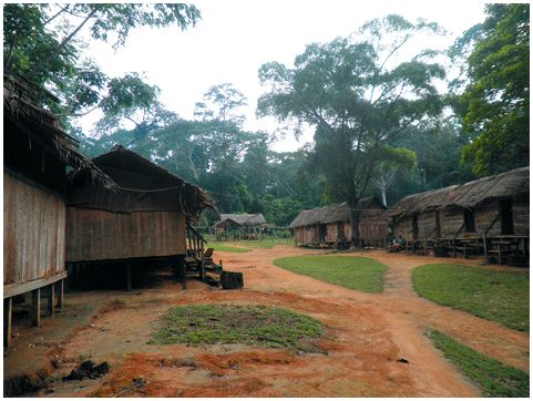 Сюрпризы лесного Камеруна
