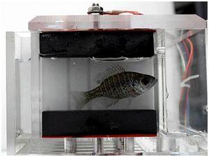 Ученые-экологи используют поведение рыб для контроля качества воды