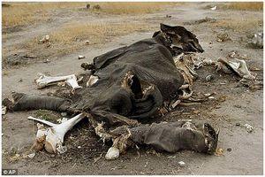 В национальном парке Зимбабве отравили 22 слона
