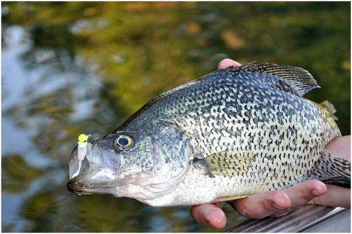 Лучшие времена рыбалки: краткий обзор идеального времени рыбалки для рыбы, которую вы хотите поймать