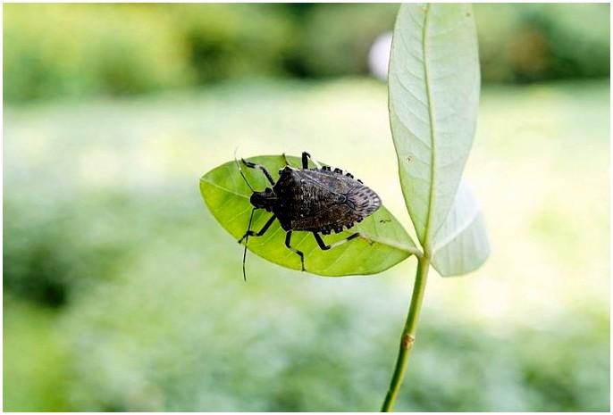 Как сделать охотника на насекомых: привлечь и поймать повстанцев