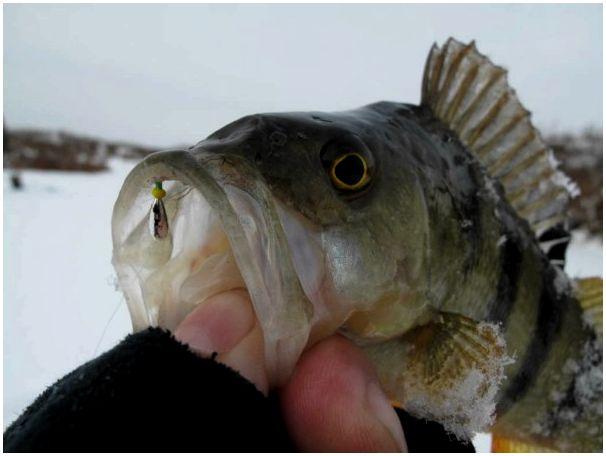 Из чего состоит рыбалка