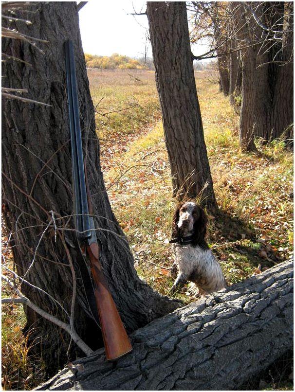 Охота в десять минут