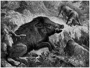 Охота вКизлярских садах