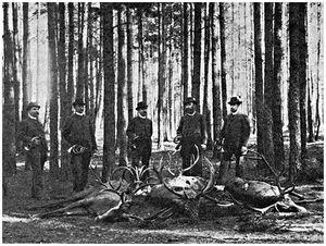 Правила охоты в царские времена