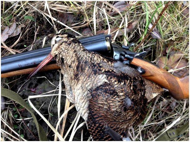 Ружье для охоты с легавой