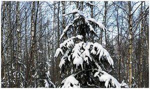 Тайна первого снега