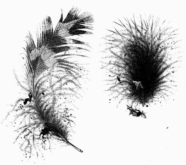 Узнать поросчерку пера