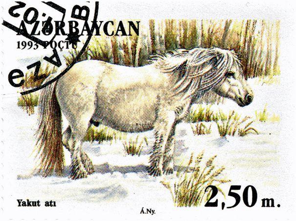 Вольные кони Тунгуски