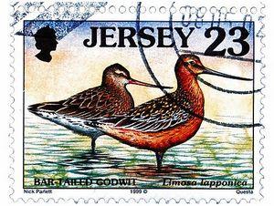 Бекасы, веретенники и турухтаны на почтовых марках