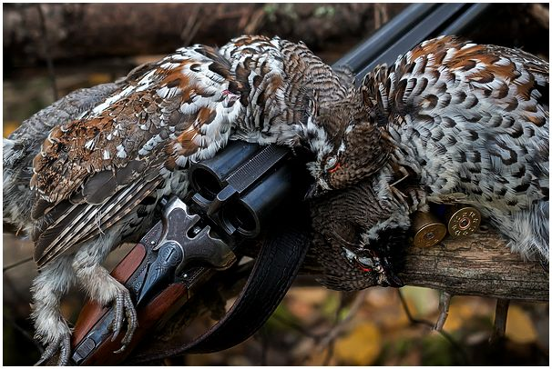 Фотоочерк об охоте на рябчика