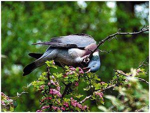 Летите, голуби, летите…