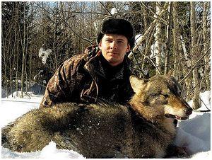 Патрон на волка