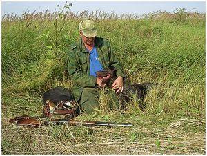 Перипетии летней охоты