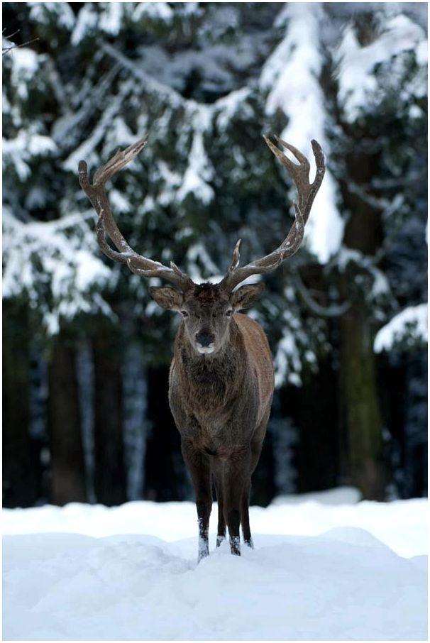 Роль охоты в управлении популяциями животных