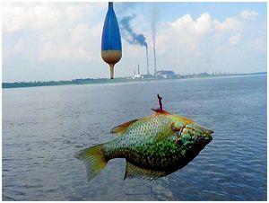 Солнечная рыбка