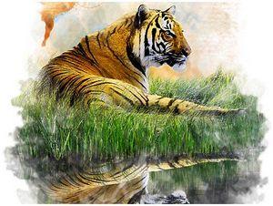 Странствующий тигр