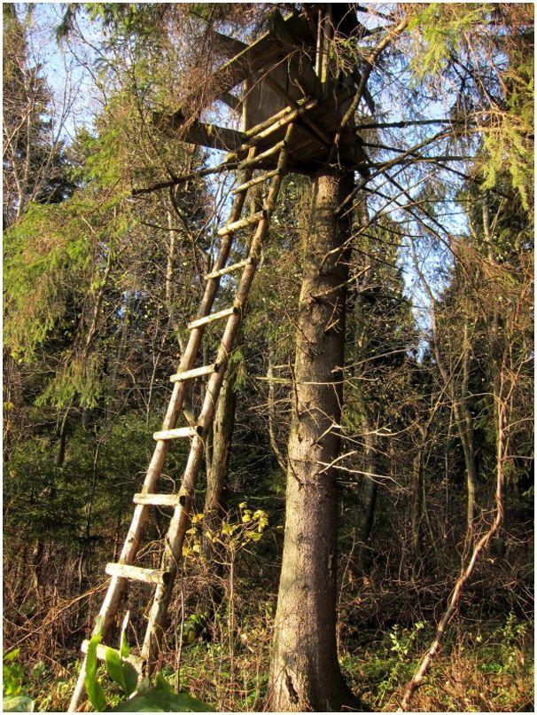 Дом на дереве засидка фото