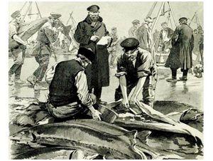 Каких рыб ловили москвичи?