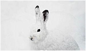 Наш заяц