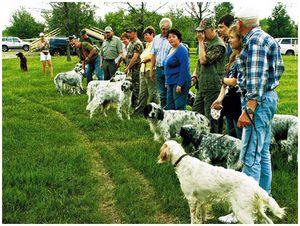 Охотничье собаководство россии