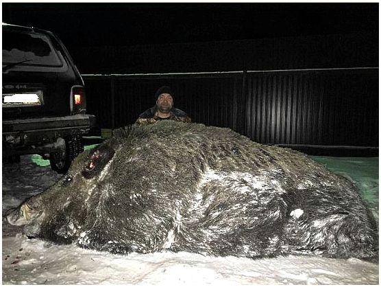 Охотник с Урала добыл рекордного кабана