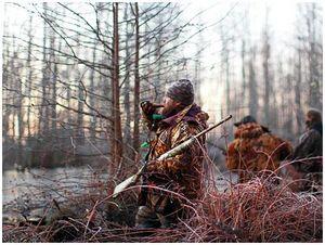 Сколько стоит охота?
