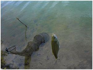Сохранение  улова в садке