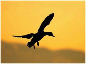 Сроки весенней охоты 2014