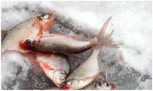 Улучшение  результатов  зимней ловли