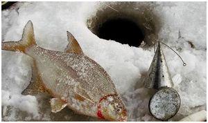 Умение прикормить рыбу зимой