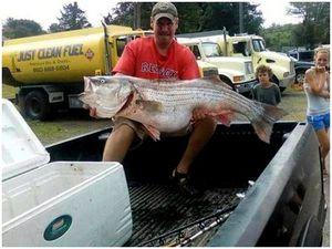 В США установлен новый мировой рекорд: полосатый окунь (striped bass)