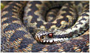 Если собаку укусила змея