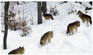 Ивановская область:  лицом к простым охотникам