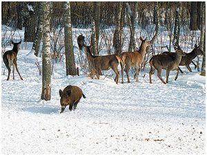 Как укрепить охотничье хозяйство?