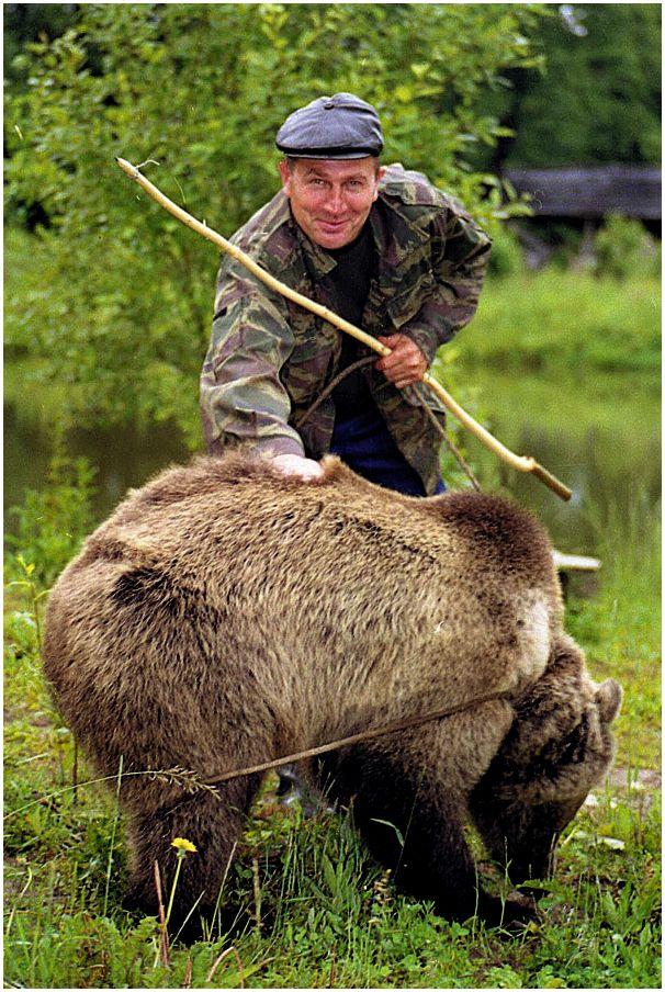 Медведь для интуриста