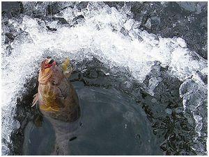 Новоселы москва-реки