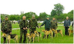 О подделке родословных на охотничьих собак