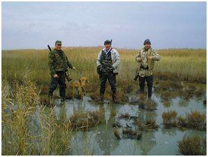 Охота с гончими на Кубани