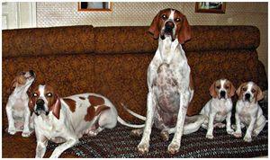 Пара советов  по воспитанию щенка