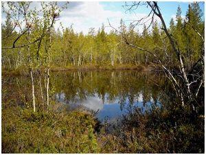 Поправки в законопроект об охоте и охотничьих ресурсах