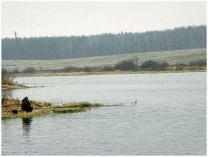 Рыбалка в предзимье на прудах